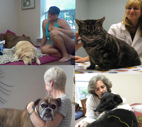 Veterinary Acupuncture Treats Illness and Relieves Pain