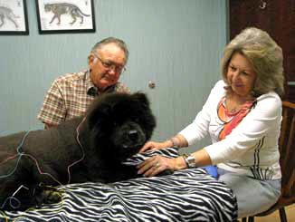 arthritis in dogs is treated with acupuncture and herbal medicine